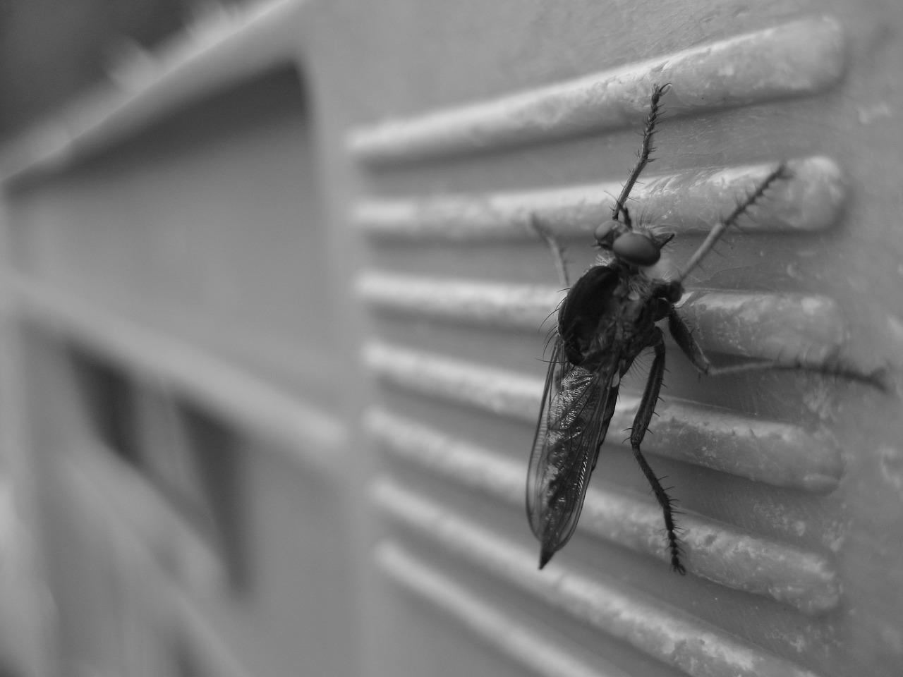 mosquito-4