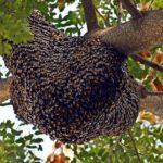 beehive-3960986_640